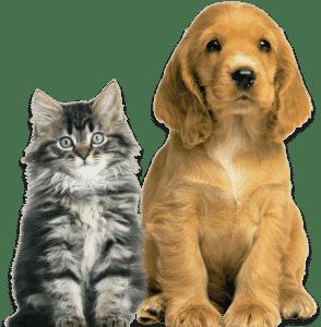 peli di cane e gatto